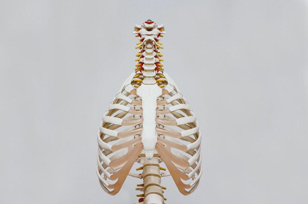 przepuklina kręgosłupa