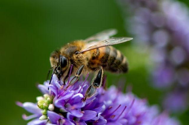właściwości pyłku pszczelego